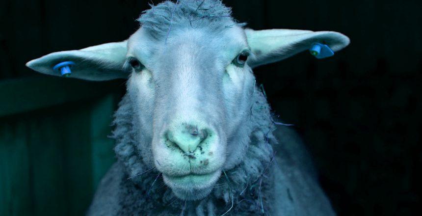 Blue_Sheepblue Dienstplanung - Zufriedene Mitarbeiter